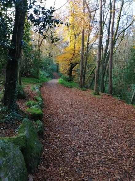 Crough Wood